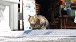 music_photo1249.jpg
